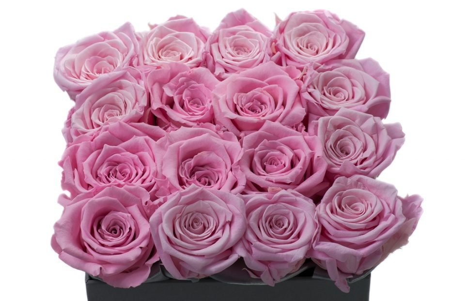 Pink Infinity-Roses-in a-Square-Box