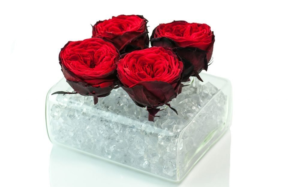 Preserved-Red-English-Roses