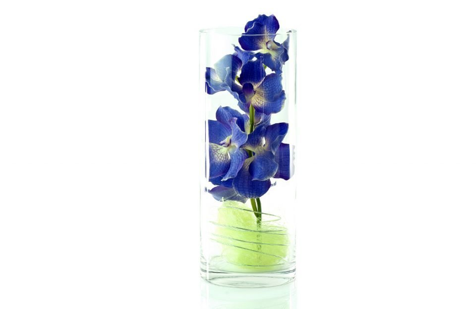 Luxury vanda orchid in clear cylinder