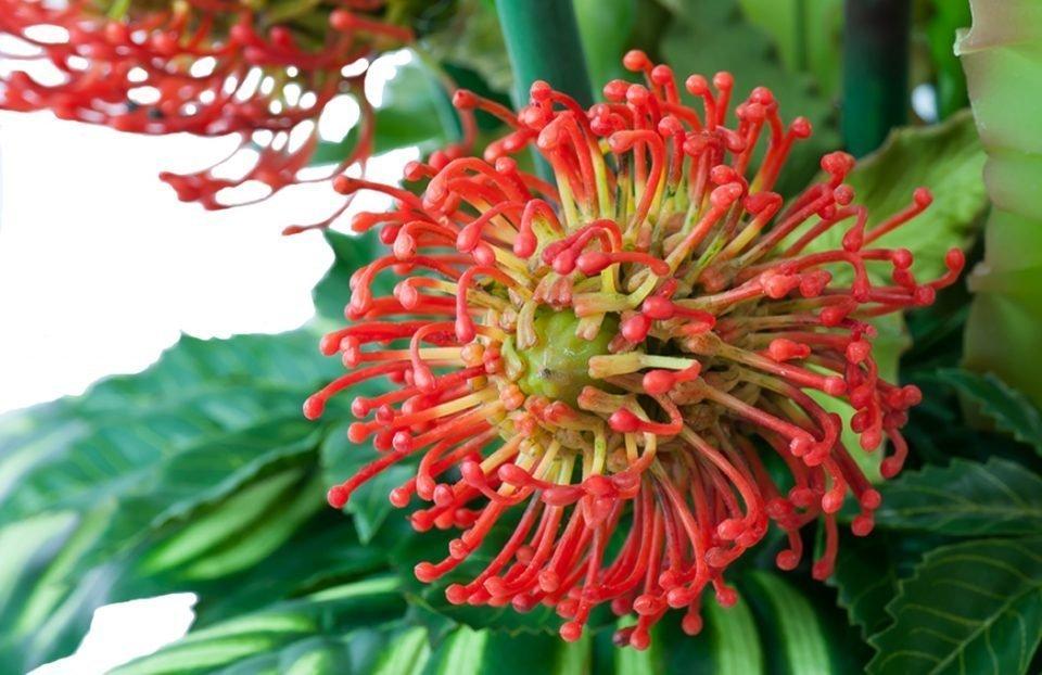 Silk Flower Arrangements 6