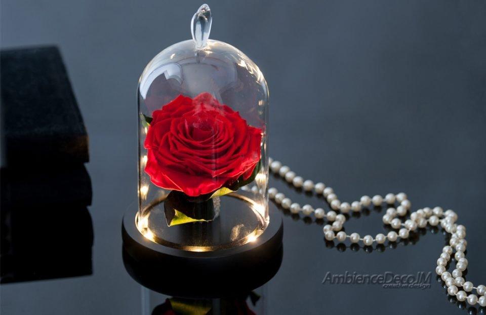 Beauty & the-Beast-Rose