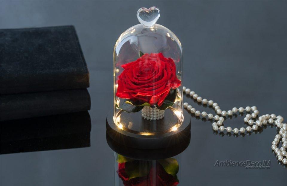 Beauty & the Beast Rose