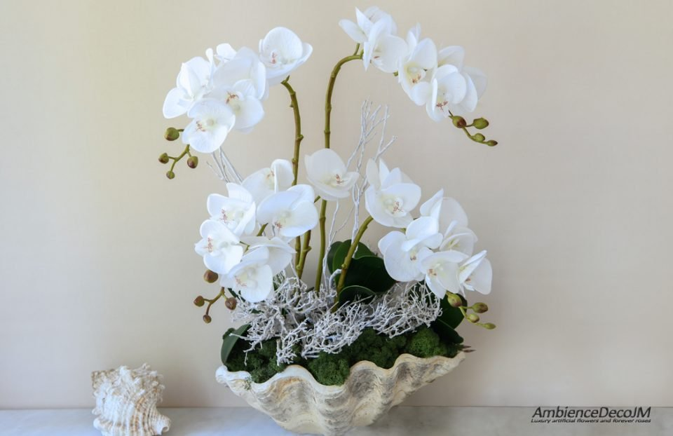 Orchids in a shell