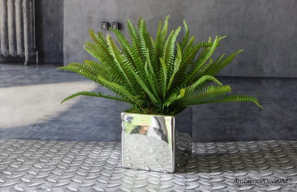 Forest fern in a pot